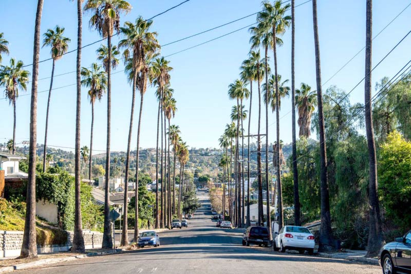 A palm tree lined residential street in Highland Park, LA.