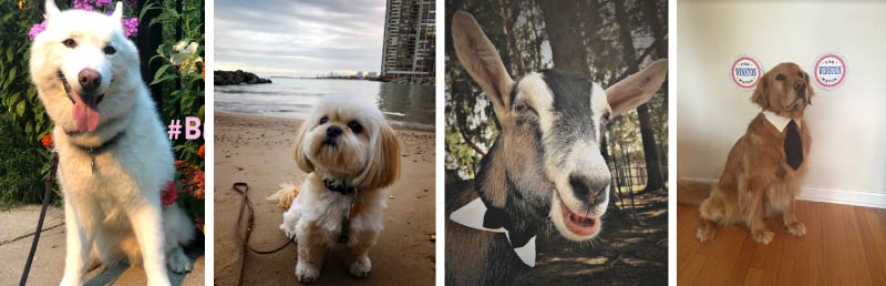 Some of the candidates for Pet Mayor of Edgewater.