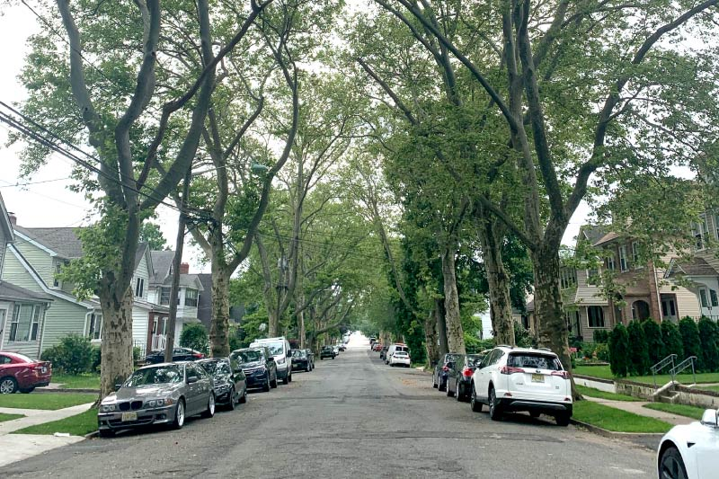 A residential street in Rutherford.