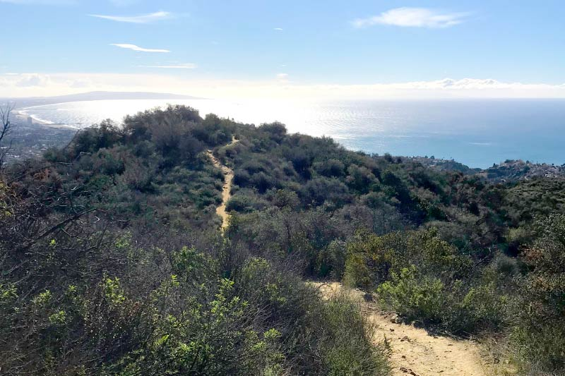 A hiking path in the Santa Monica mountains near Westwood.