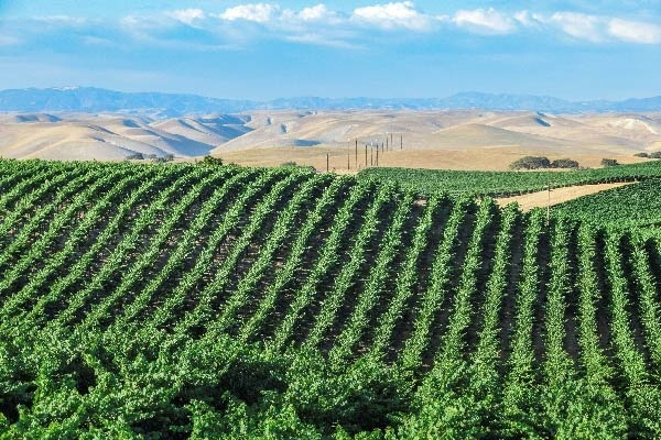 Discover These 3 Small Towns in California's Wine Region