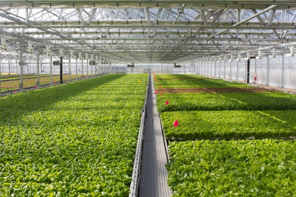 105,000-Square-Foot Greenhouse Joining Pullman Park Development
