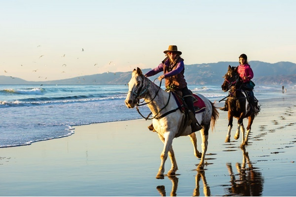 Bay Area Neighborhoods Horseback Riders Love