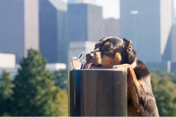 The Most Dog-Friendly Neighborhoods in Dallas-Fort Worth