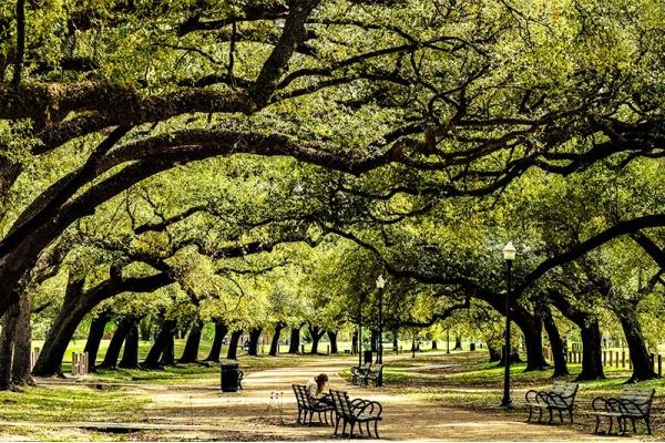 Houston's Greenest Neighborhoods