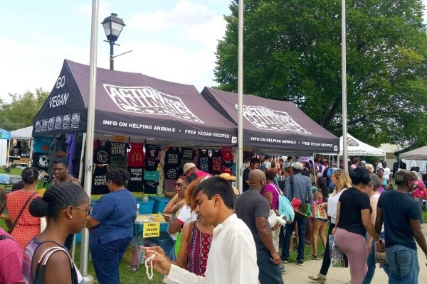 Baltimore Neighborhoods Through Their Festivals
