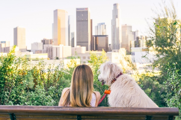 Tips for Dog Owners Looking to Purchase a Home in LA