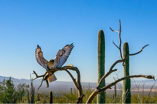 Tucson Neighborhoods Where You Might Just Run Into Wildlife