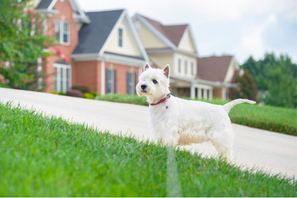 Taylor Morrison Communities Are Passionate About Being Pet-Friendly
