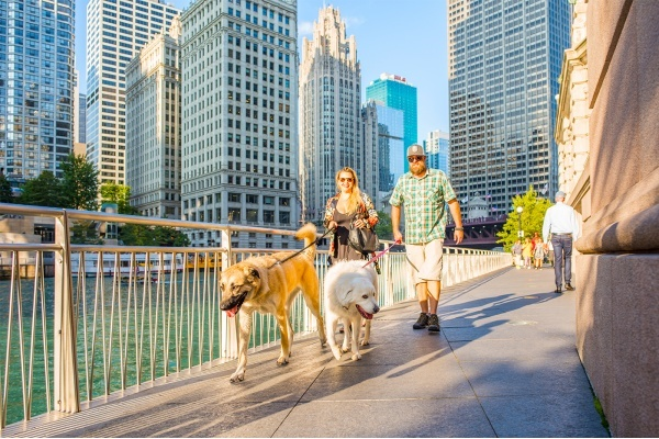 7 of the Most Dog-Friendly Neighborhoods in Chicago