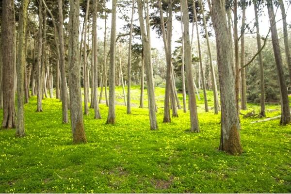 A Day Guide to Exploring San Francisco's Presidio National Park
