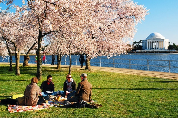 6 Spots for a Perfect Picnic in D.C.