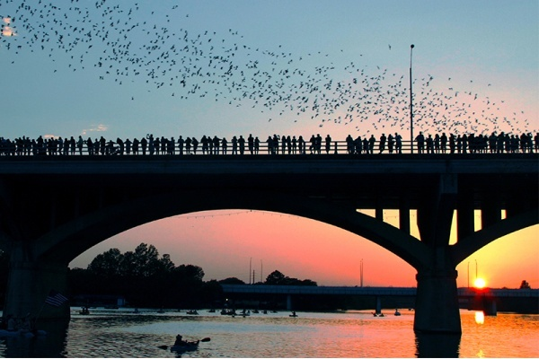 The Best Ways to See Bats Fly at Austin's Congress Avenue Bridge