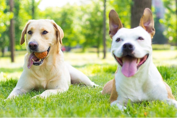 3 Chicago Suburbs Ideal for Dog Owners