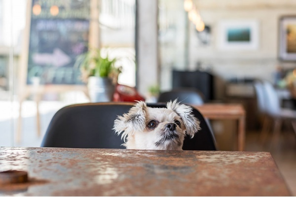 The Best Chicago Neighborhoods for Taking Your Dog Out to Eat and Drink With You