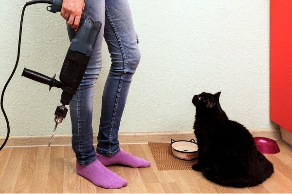 Home Improvements Your Pet Will Love