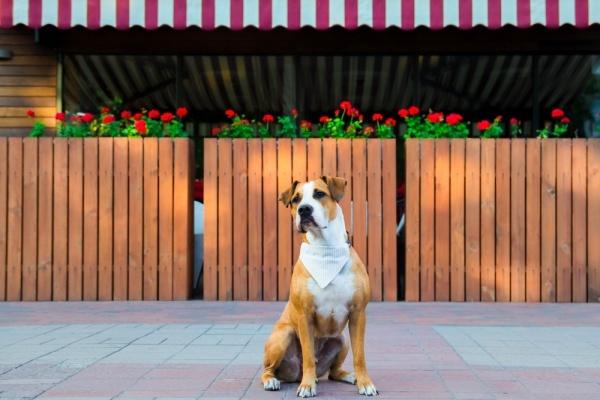 Pet-Friendly Restaurants in San Francisco
