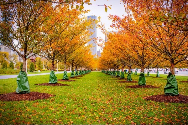 Your Neighborhood Guide to Enjoying Autumn in Chicago