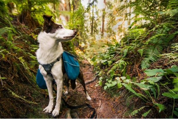 5 Dog-Friendly Hikes Within An Hour Drive of San Francisco