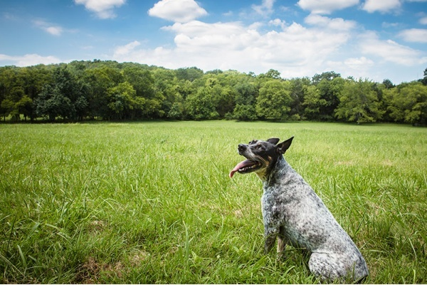 The Most Dog-Friendly Neighborhoods in Nashville