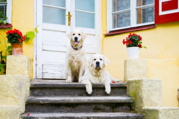 For Millennials, Dogs a Bigger Factor in Home-Buying Than Marriage or Children