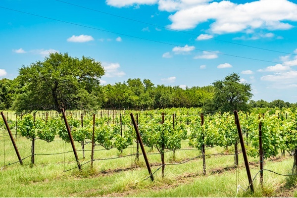Title photo - Where to Find the Wineries of Dallas-Fort Worth