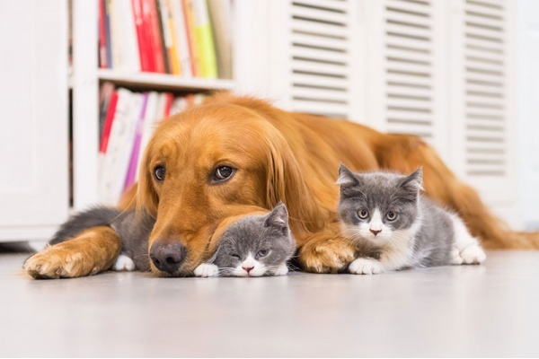 5 Las Vegas Neighborhoods Where You Can Adopt a Pet