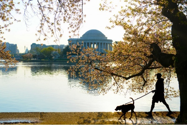 10 Things I've Learned Living in D.C. for 3 Years