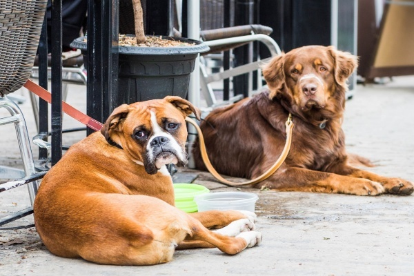 5 San Francisco Neighborhoods With Dog-Friendly Restaurants