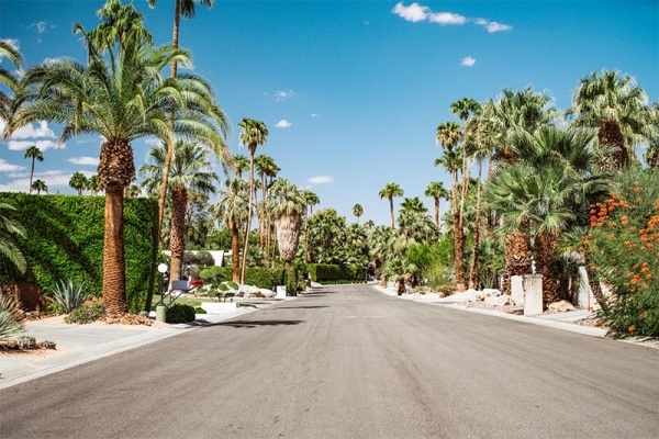 A street lined with palm trees and tall hedges with a blue sky in Palm Springs, California
