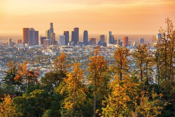 Autumnal trees in front of the skyline of Los Angeles with an orange sky