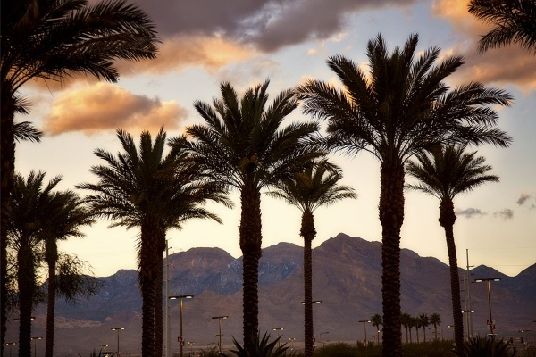 Title photo - What It's Like Living in Paradise, Las Vegas