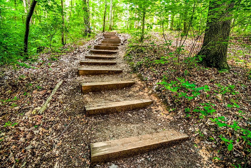 A wood plank path descends up a hill in a forest in Crowders Mountain State Park