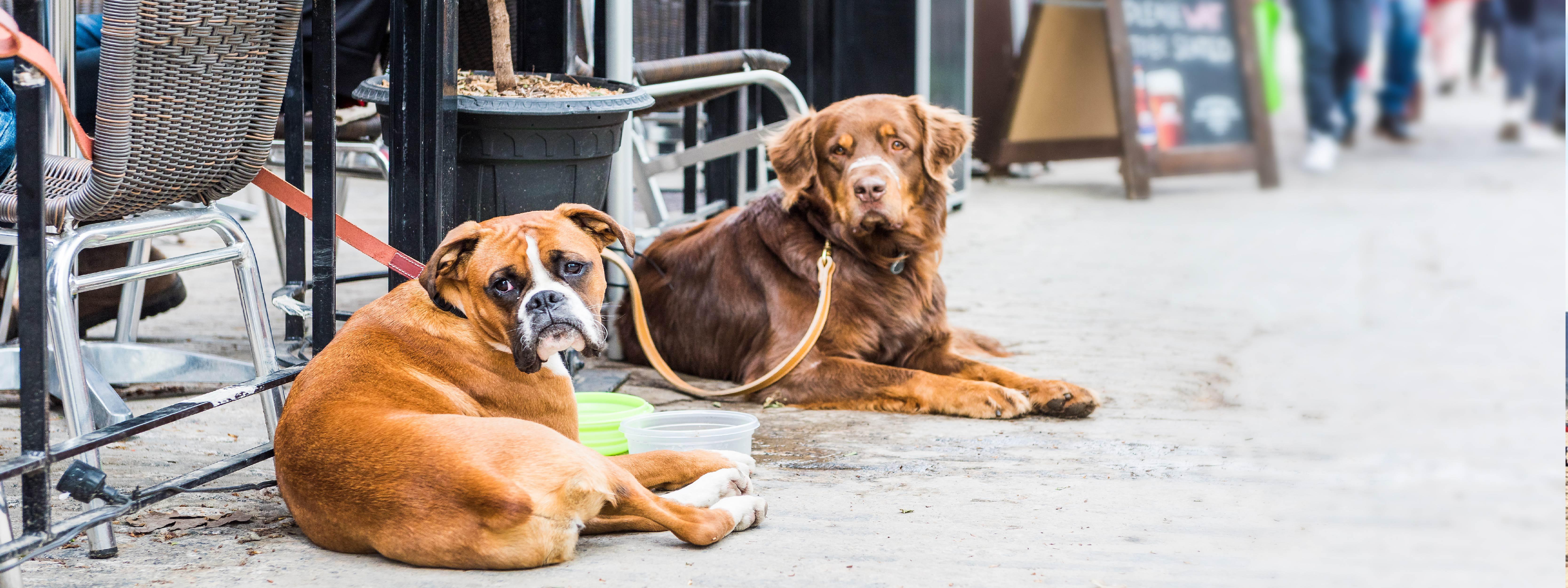 5 San Francisco Neighborhoods With Dog-Friendly Restaurants