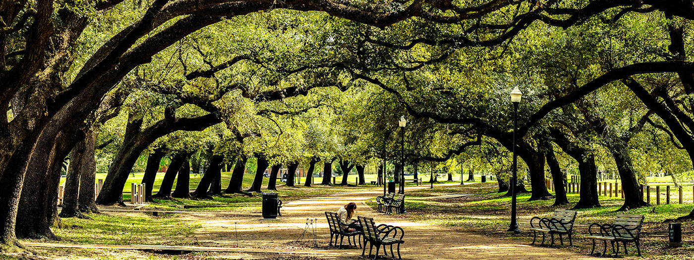 Houston's Greenest Neighborhoods