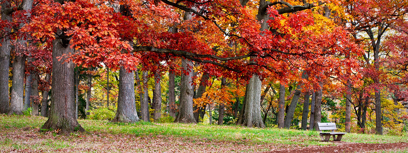 See the Changing Colors of Fall in These 6 Chicago Suburbs