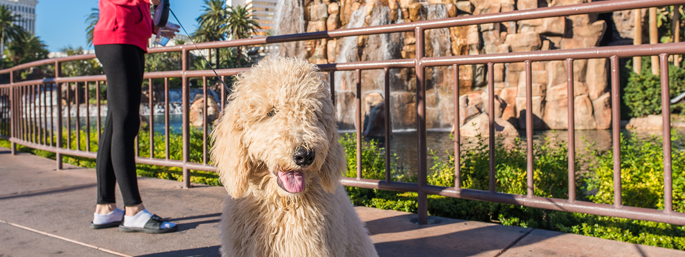 The Best Las Vegas Neighborhoods for Pet Owners