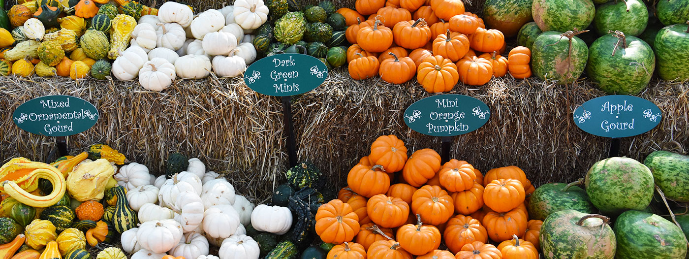 The Best Neighborhoods to Celebrate Fall in Dallas/Fort Worth