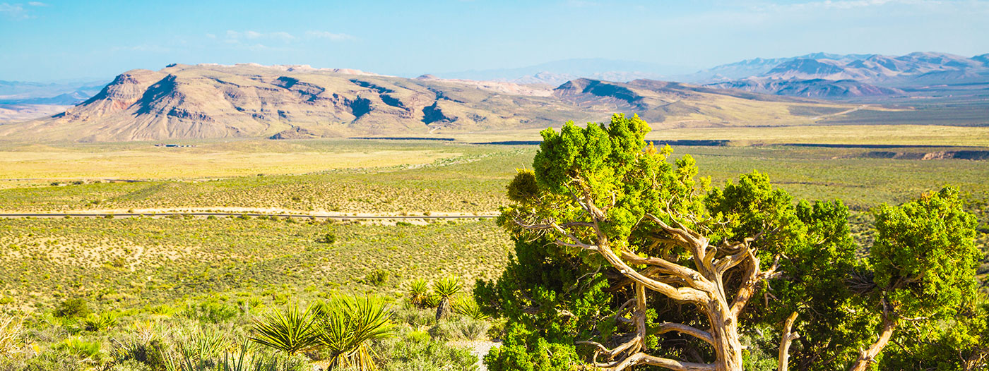 Best Neighborhoods in Las Vegas with Hiking Trails