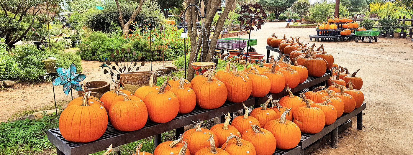 Spend the Day at a Pumpkin Patch in These 3 Central Texas Towns