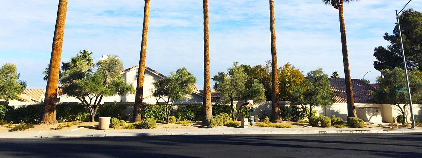 Good Neighbor Spotlight: Mercedes Martinez of Summerlin