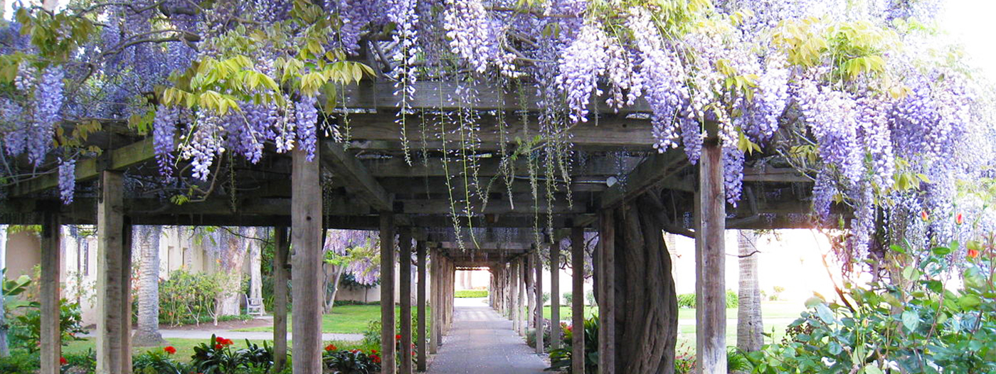5 Ways to Enjoy Spring in Santa Clara