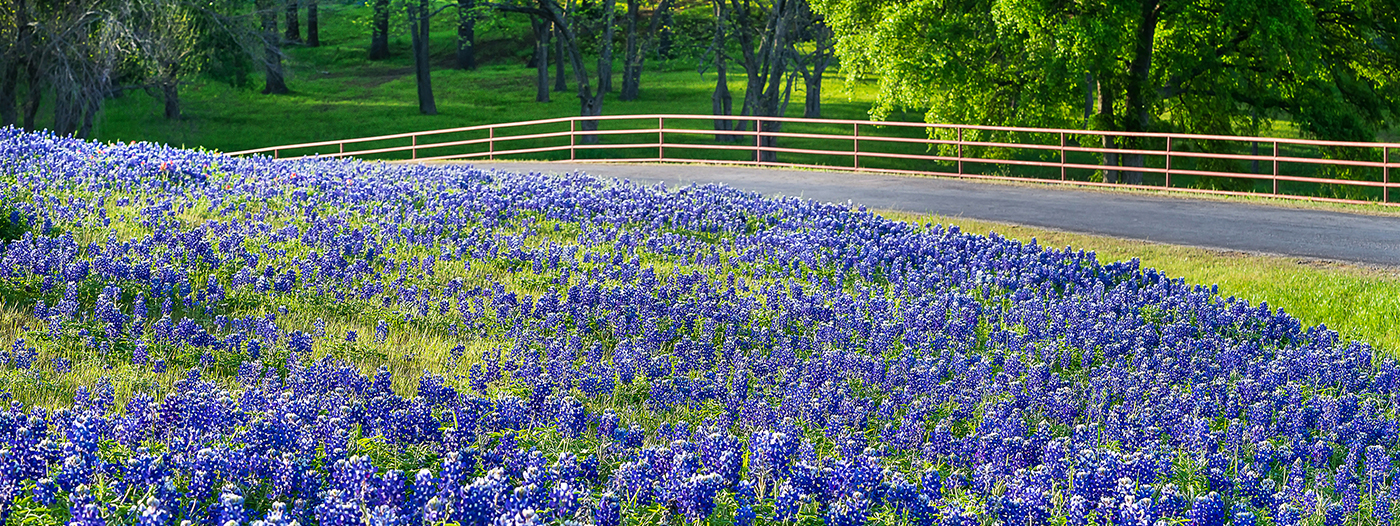 The Best Places to See Texas Bluebonnets This Spring