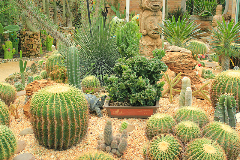 How To Create Your Own Award Winning Southwest Xeriscape Garden