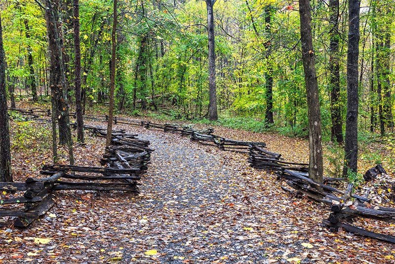 A large trail winds up a hill covered in orange leaves with a wooden barrier