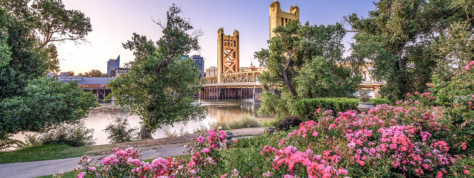 A view of a bridge in Sacramento taken from flower bushes and trees