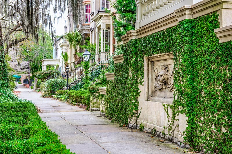An ivy-covered wall next to old homes in Savannah Georgia