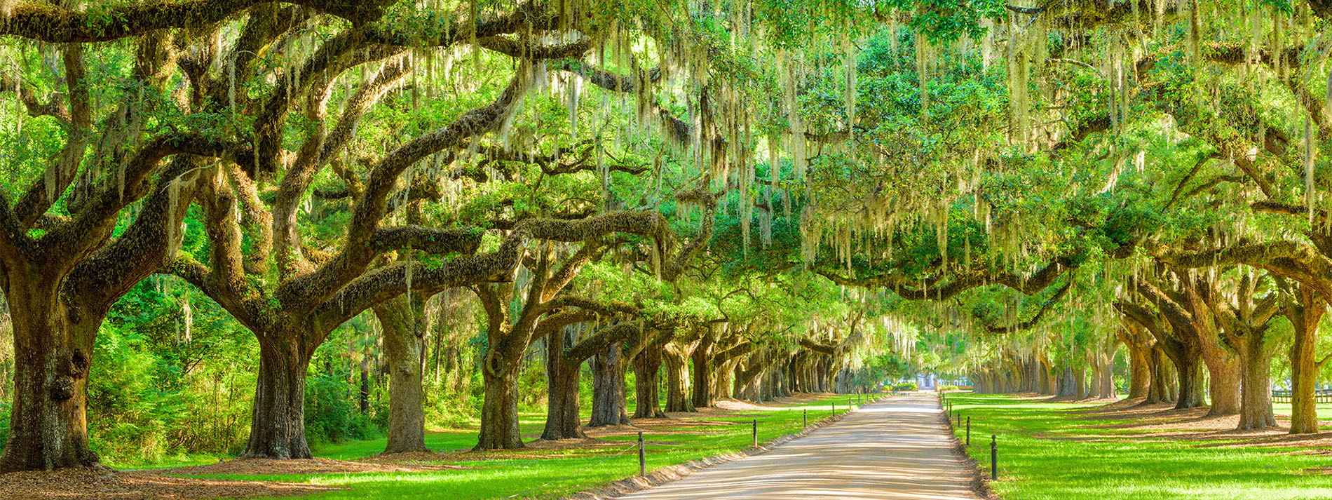 Living in Charleston: Everything You Need to Know