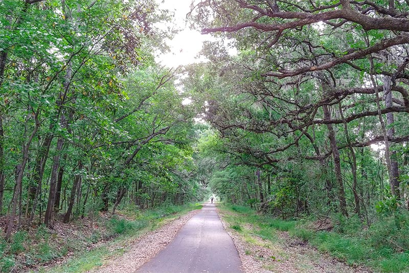 The West Ashley Greenway outside Charleston with trees lining either side